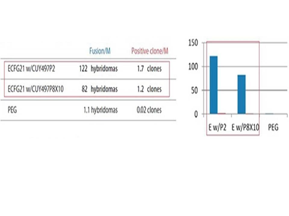 ECFG21-Antigen used-Hydrophobic octapeptide