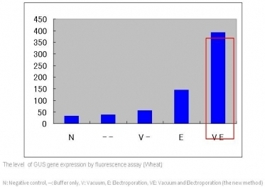 The level of gene expression by fluorescene assay - wheat